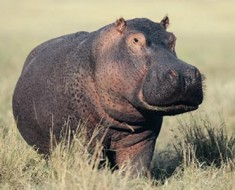 hippo-sunscreen-1