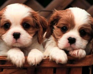 Dog Feces Health Problems Information For Dogs And Puppies