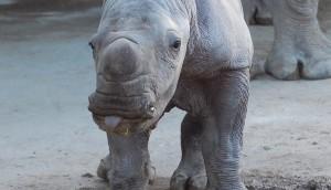 Photo by Kylie Martin, Hamilton Zoo.