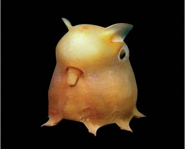 "Photo Courtesy of ""The Deep: The Extraordinary Creatures of the Abyss"" by Claire Nouvian"