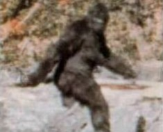 Bigfoot? Photo by Patterson-Gimlin film (Wikimedia)