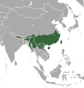 Chinese Pangolin Distribution