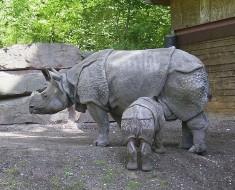 Javan Rhinoceros - Almost Extinct
