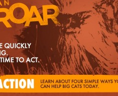 Cause An Uproar_Help Save Big Cats Initiative