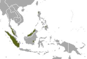 Dyak Fruit Bat Distribution Map