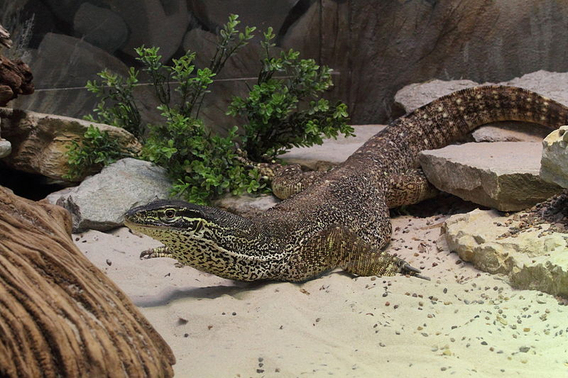 cool facts about the argus monitor the argus monitor is also know as    Argus Monitor