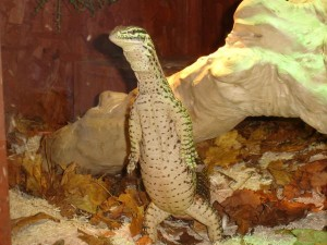 Argus Monitor Standing