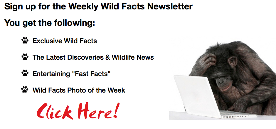 Wild Facts Newsletter
