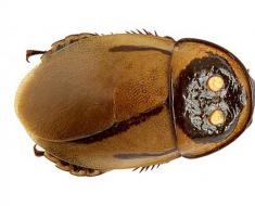 Glowing Cockroach