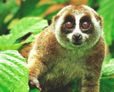 10 Cute But Deadly Animals - Featured