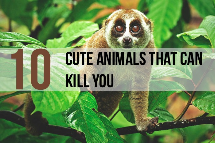 10 Cute But Deadly Animals - Main
