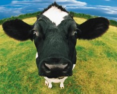 10 Smelly Land Animals - Featured