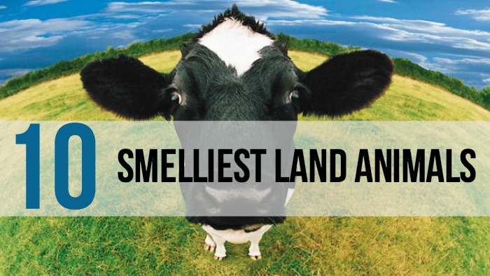 10 Smelly Land Animals - Main
