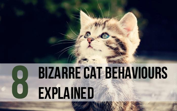 8 Bizarre Cat Behaviours Explained - Main