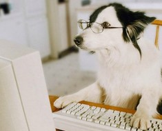 HOw Clever is Your Dog - Featured