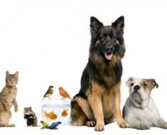 Perfect Pet Quiz - Featured