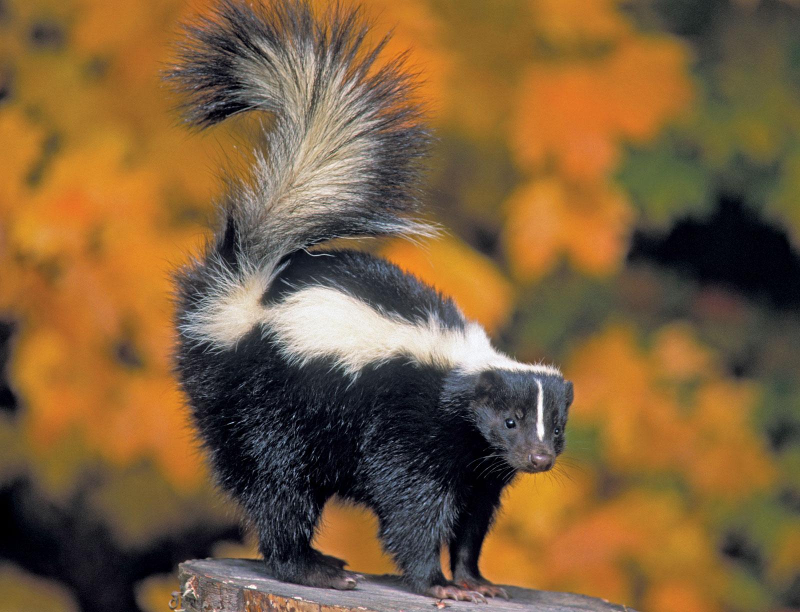 the 10 smelliest land animals