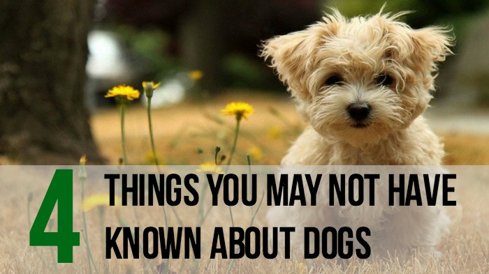 Things You Didn't Know About dogs