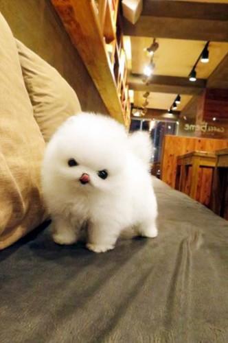 1. Furry Puppy
