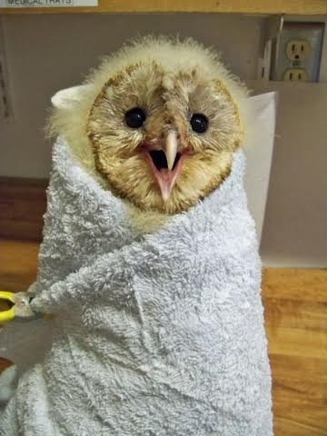 10. Owl In A Towel