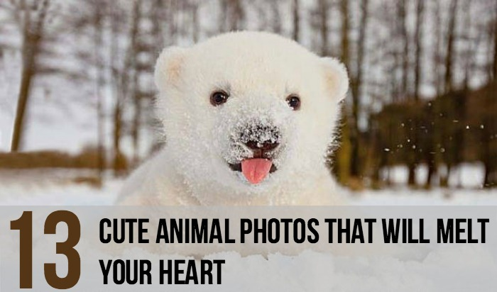 13 Cute Animal Photos That Will Melt Your Heart