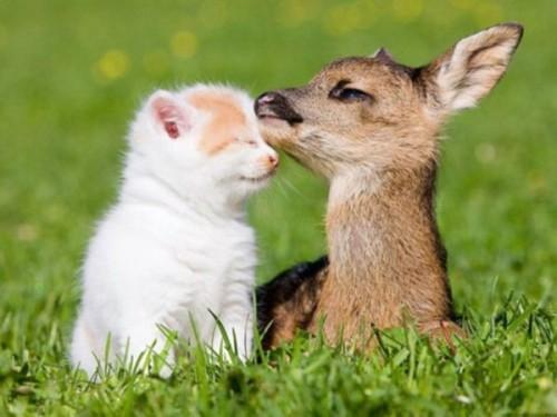 9. Kitten And Bambi