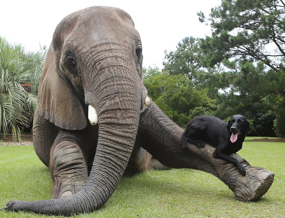 Dog and African Elephant