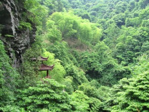 High bamboo forests of central China