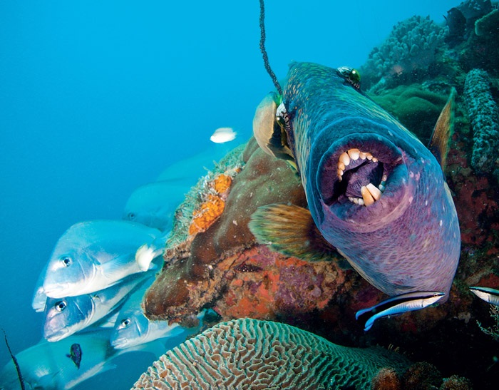 7 Unique Ocean Habitats