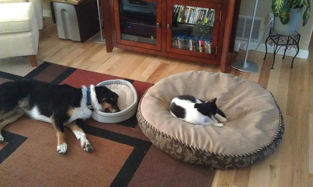 stolen dog bed