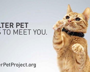 1. The Shelter Pet Project_1