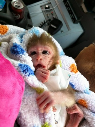 6. Save Baby Monkeys From Laboratory