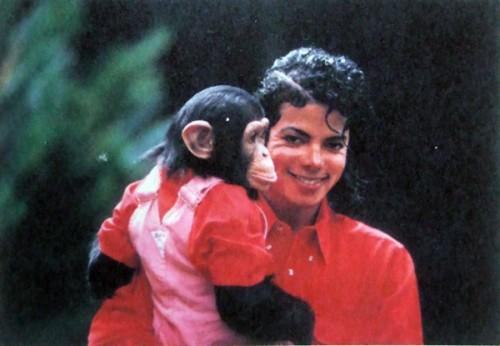chimpanzee Michael Jackson