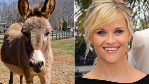 donkeys reese witherspoon