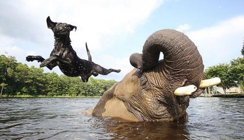 the elephant and the labrador