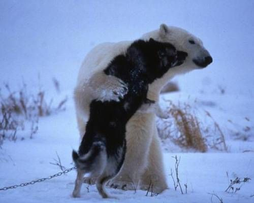 the polar bear and the dog